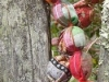 echarpe-colliers