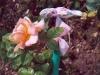 hochet-fleur