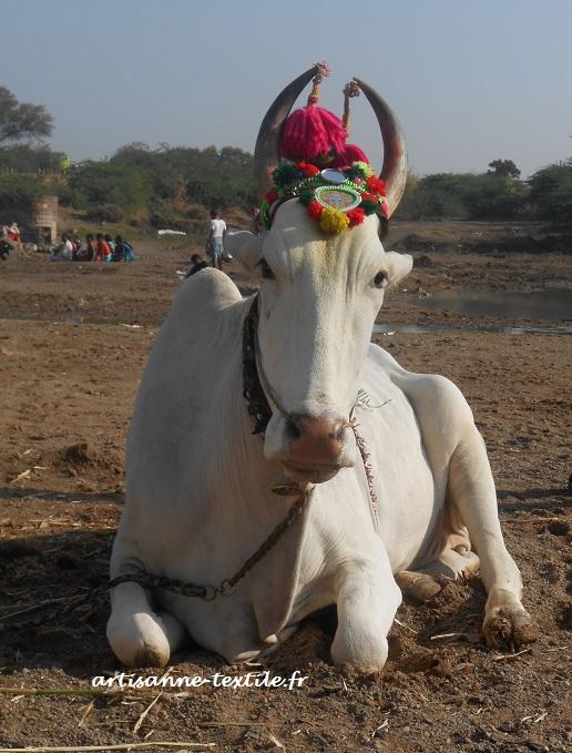 vache sacrée et pomponnée
