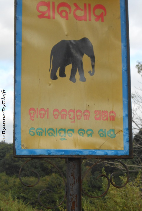 attention elephant