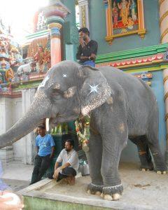 Inde éternelle: éléphant 1