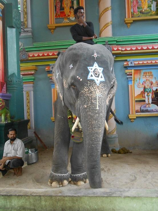 Inde éternelle : l'éléphant du temple