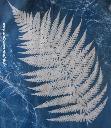 cyanotype sur tissu: la fougère du jardin