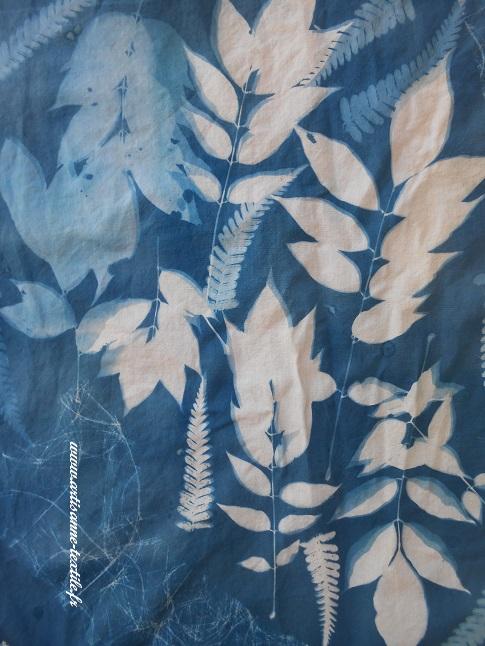 cyanotype sur tissu 3: les glycines