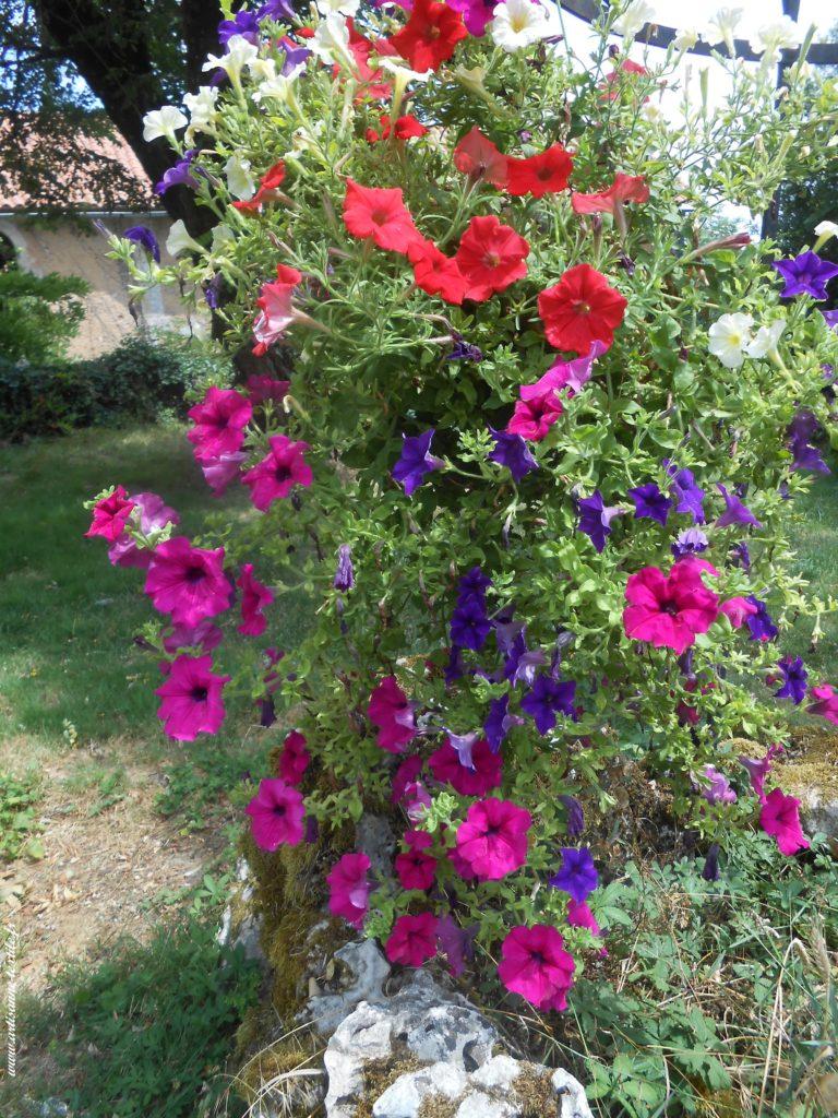 Dans mon jardin, mes fleurs