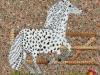 cheval D